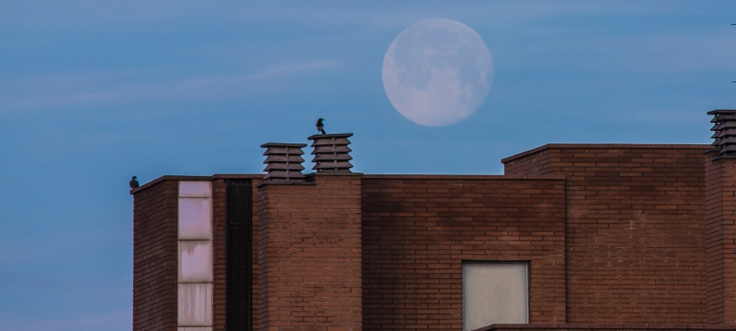 La lluna i elsocells